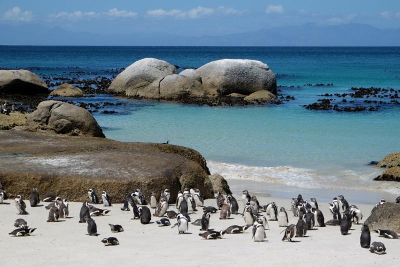 Suedafrika-Kapstadt-Pinguinkolonie-Boulders-Beach-Meer