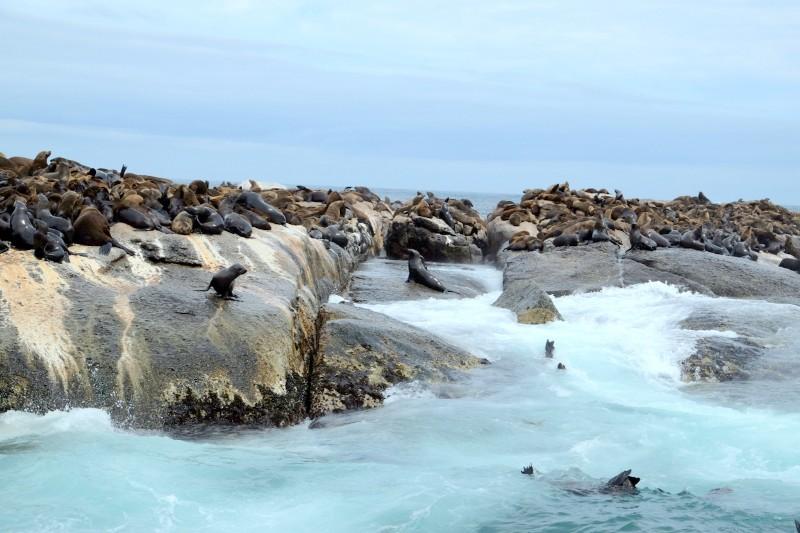 Suedafrika-Hout-Bay-Robbeninsel