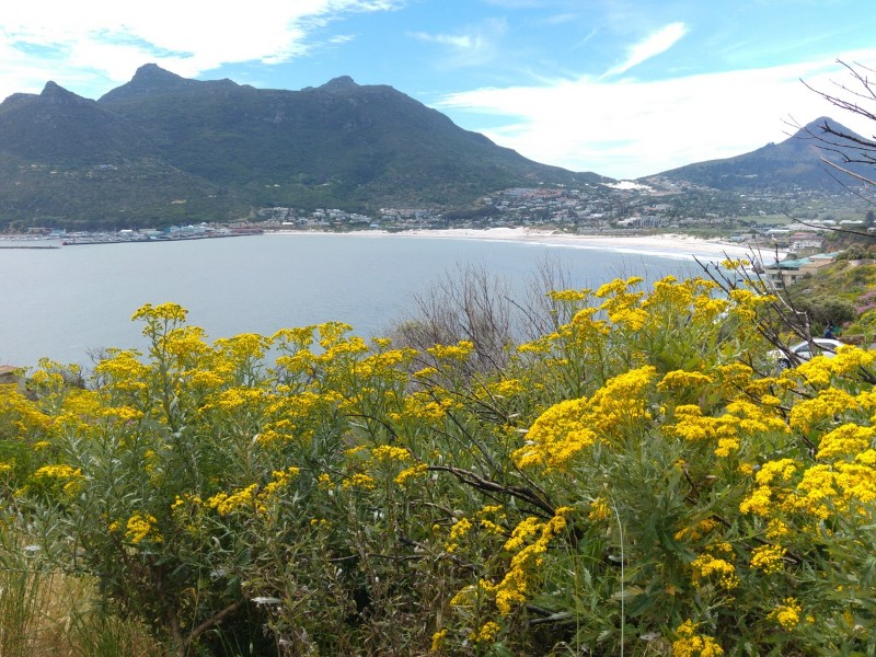 Suedafrika-Kapstadt-Chapmans-Peak-Drive-Panorama-Bucht