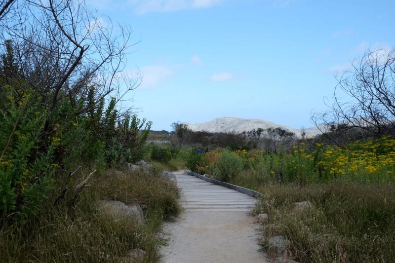 Suedafrika-Kapstadt-Silvermine-Nature-Reserve-Wanderweg