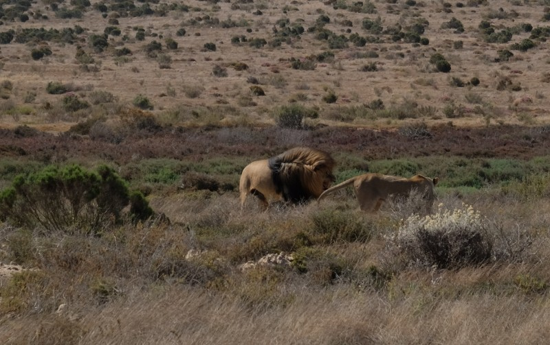 Suedafrika-Albertinia-Garden-Route-Game-Lodge-6