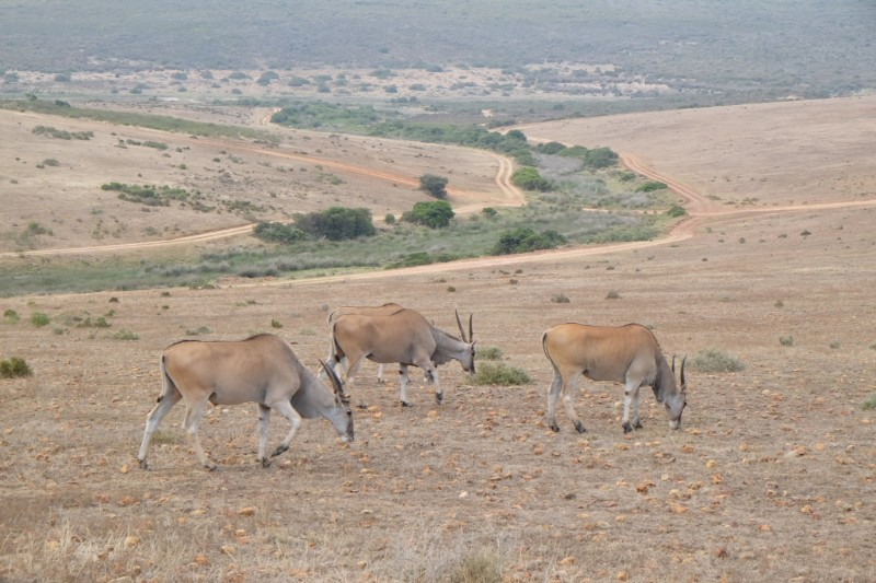 Suedafrika-Albertinia-Garden-Route-Game-Lodge-7