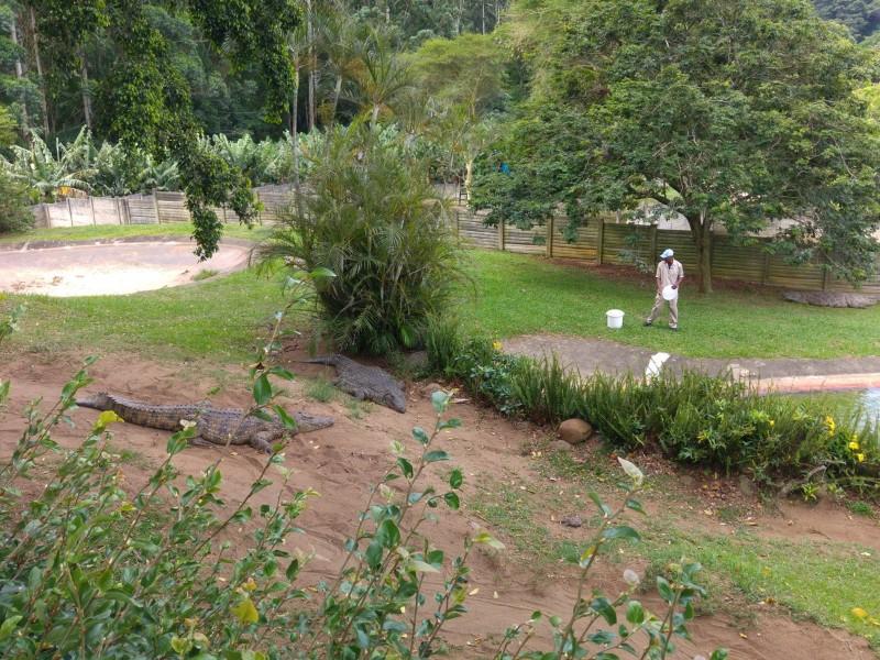 Suedafrika-Margate-Riverbend-Crocodile-Farm-Fuetterung