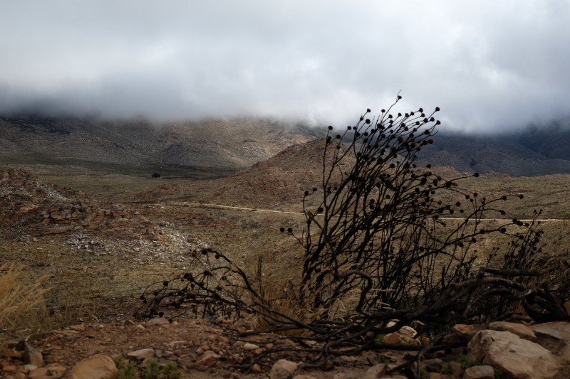 Suedafrika-Swartberg-Pass-12