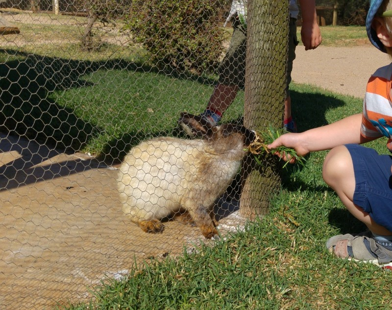 Suedafrika-Jeffreys-Bay-Wild-Fig-Farm-Kaninchen