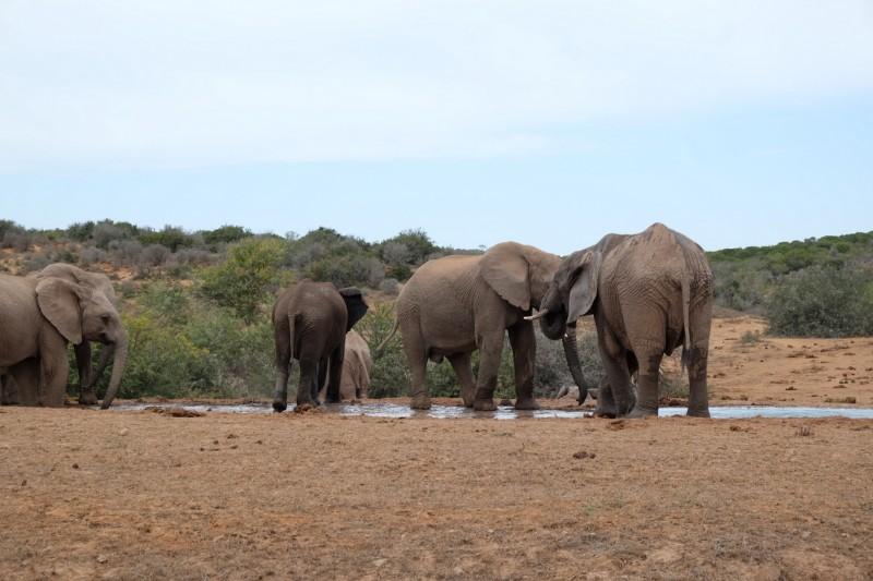Suedafrika-Addo-Elephant-Park-2
