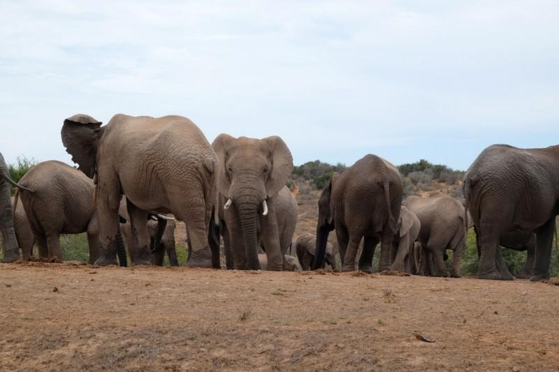 Suedafrika-Addo-Elephant-Park-3