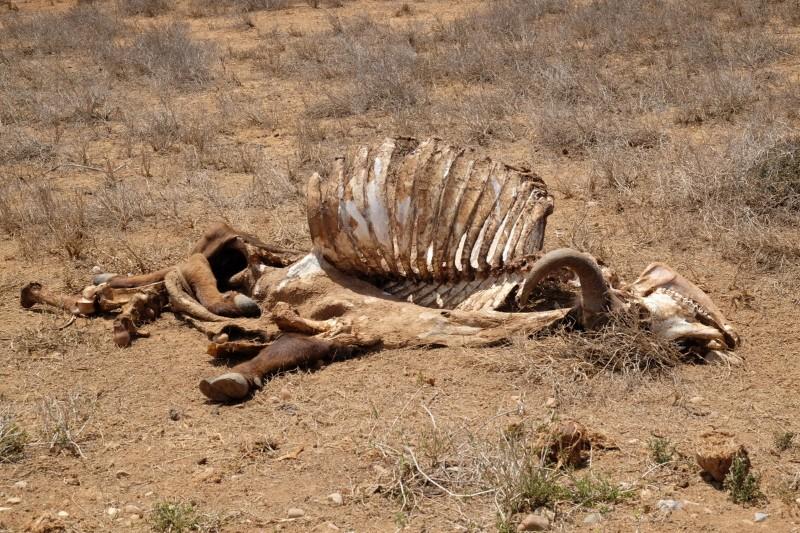Suedafrika-Addo-Elephant-Park-4