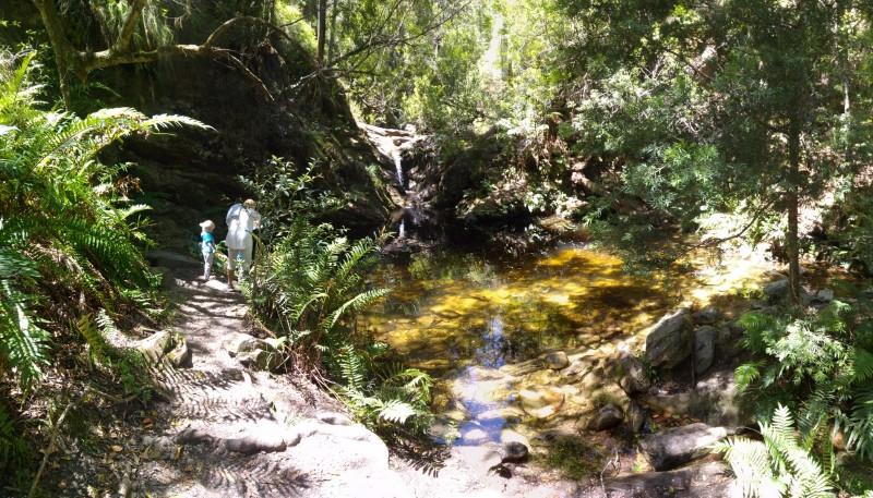 Suedafrika-Knysna-Jubilee-Creek-Wanderung-2