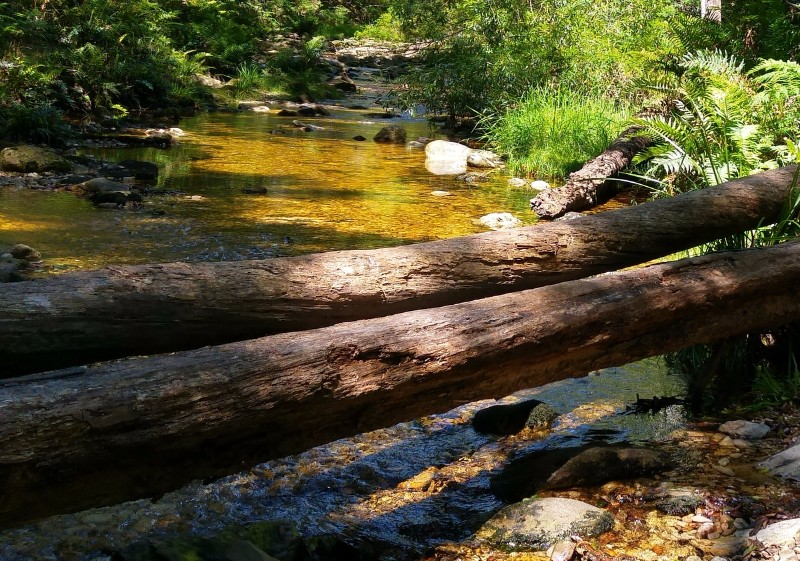Suedafrika-Knysna-Jubilee-Creek-Wanderung-4