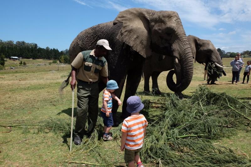 Suedafrika-Knysna-Elephant-Park-1