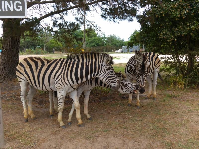 Suedafrika-Knysna-Elephant-Park-2