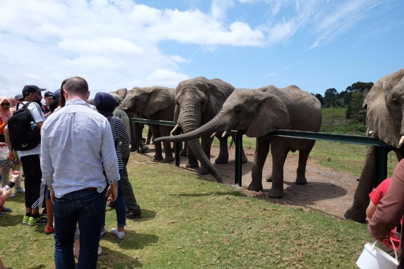 Suedafrika-Knysna-Elephant-Park-4