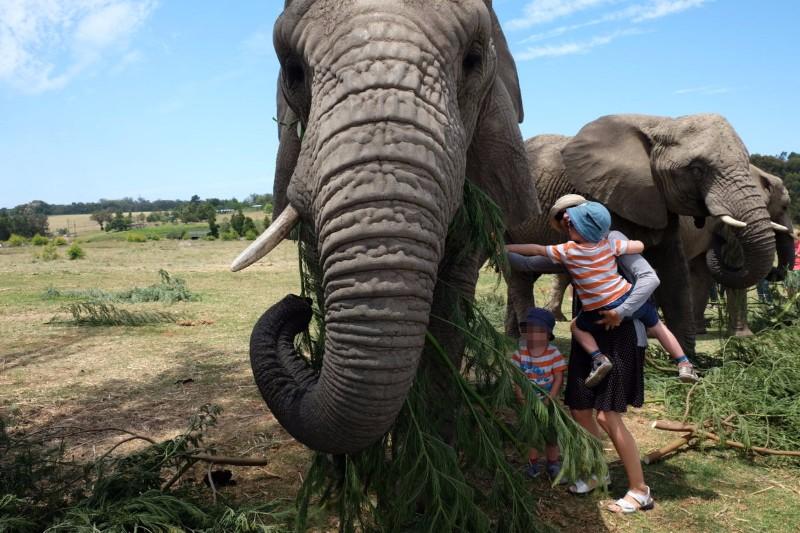 Suedafrika-Knysna-Elephant-Park-5