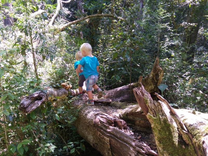 Suedafrika-Plettenberg-Bay-Garden-of-Eden-Waldwanderung